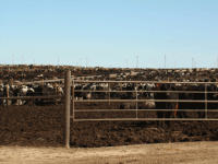 panhandle-feedlot_360_270